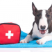 Thumbnail for April is Pet First Aid Awareness Month